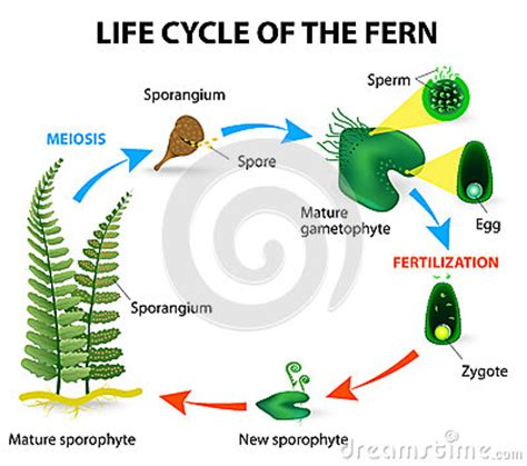Essay of water is life cycle